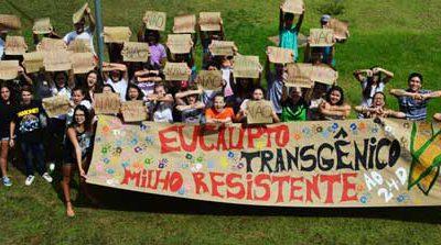 2015_03_eucalipto_transgenico_terradedireitos.org.br