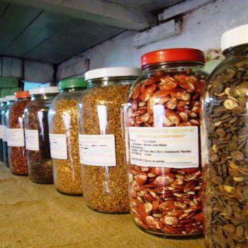 sementes-minasgerais2