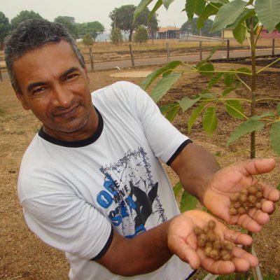 Coleta e venda de sementes nativas para recuperar territórios