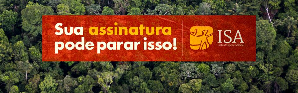 Floresta Amazônica, Mato Grosso