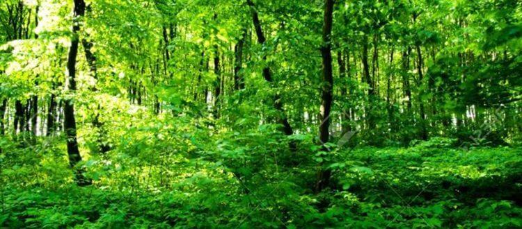 bosque-floresta-750x410