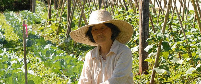 Agroecologia ainda é ignorada pela 'monocultura' da mídia
