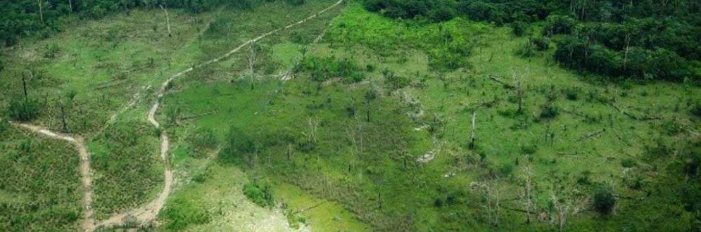 Em seis meses, 100 milhões de árvores foram derrubadas no Xingu