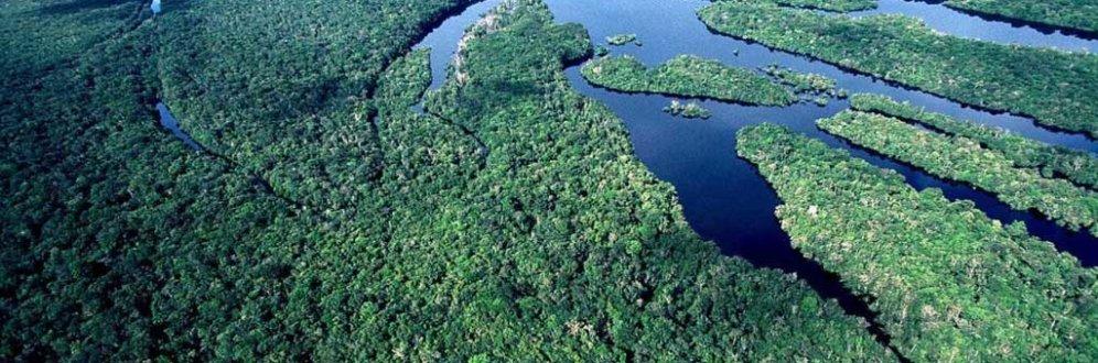 A Amazônia tem direitos