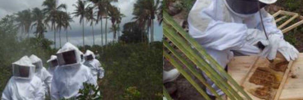 Produção de mel vira alternativa de renda para catadores de caranguejo do ES Foto: Instituto Goiamum