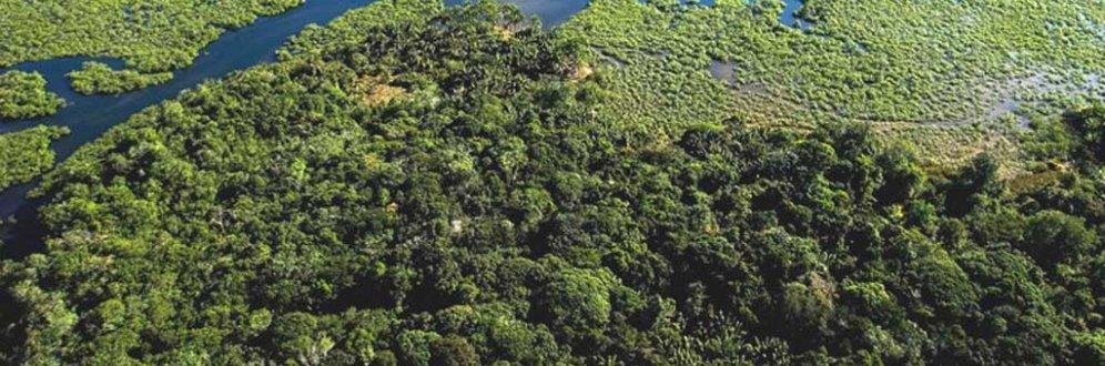 Fundação SOS Mata Atlântica apresenta propostas ambientais para Eleições 2018 Foto: Instituto de Desenvolvimento Sustentável do Sul da Bahia