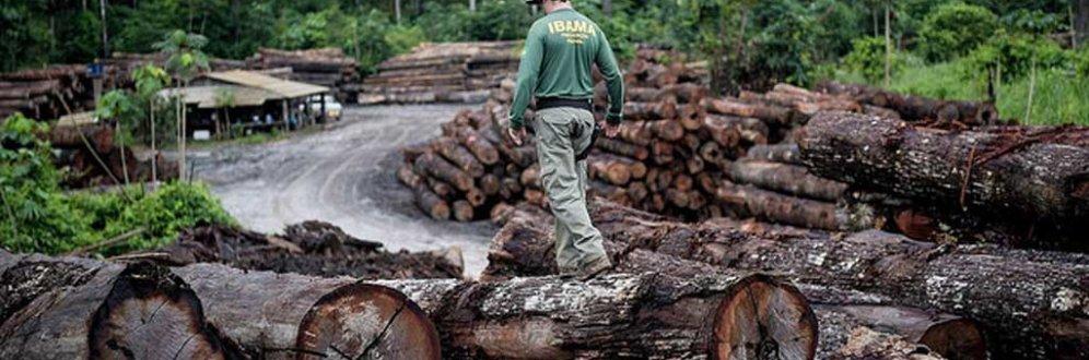 Amazônia é ignorada na maioria dos planos de governo dos presidenciáveis Foto: Felipe Werneck/Ibama