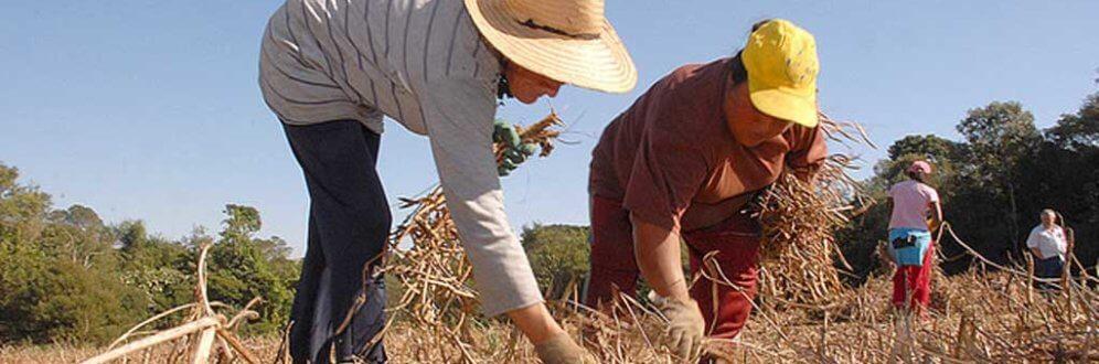 Apenas dois candidatos falam em reforma agrária no plano de governo Foto: Hedeson Alves