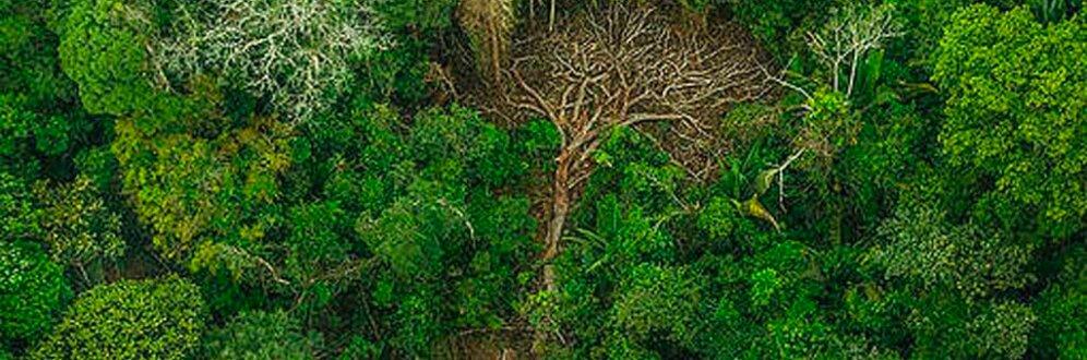 Como ruralistas e grandes corporações estão destruindo a Amazônia Foto: Christian Braga / Greenpeace