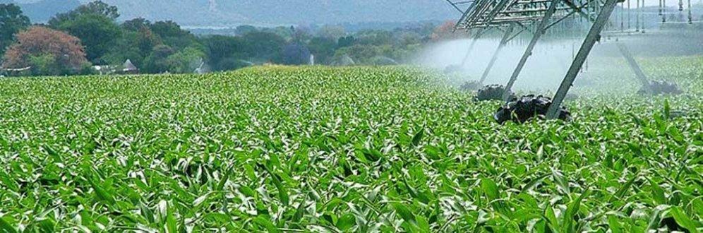'Propaganda do agronegócio não se sustenta', diz pesquisador Foto: EBC