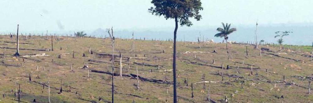 Desmatamento na Amazônia aumenta 13,7% em um ano Foto: Arquivo/Agência Brasil