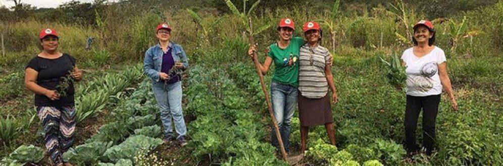 Em Minas Gerais, famílias produtoras do Café Guaií sofrem ameaça de despejo Foto: Douglas Mansur
