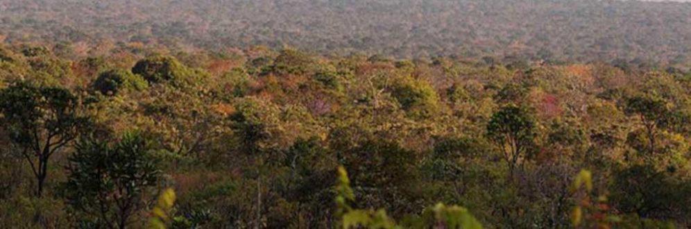 Desmatamento no Cerrado é de 6.657 km2, no período de agosto de 2017 a julho de 2018