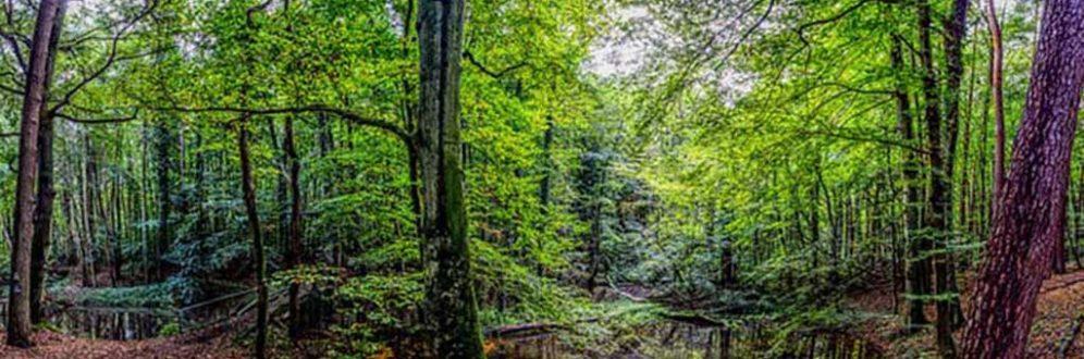 Preocupação marca data de consciência sobre proteção de florestas em 2019