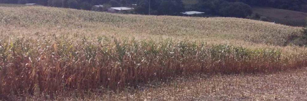 Pequenos agricultores alertam para escassez de carne, milho e leite em todo o país