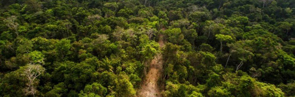 Grileiros já tomaram quase 12 milhões de hectares de florestas públicas na Amazônia