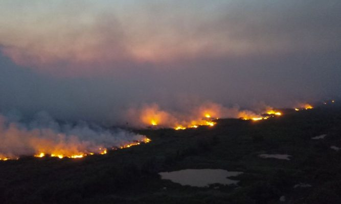 Incêndios já tomam quase metade das terras indígenas no Pantanal
