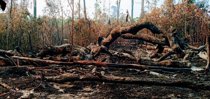Floresta roubada: invasões ameaçam Terras Indígenas no Xingu